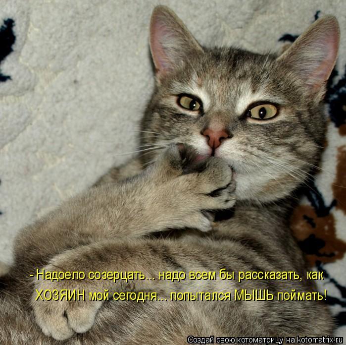 Котоматрица: - Надоело созерцать... надо всем бы рассказать, как ХОЗЯИН мой сегодня... попытался МЫШЬ поймать!