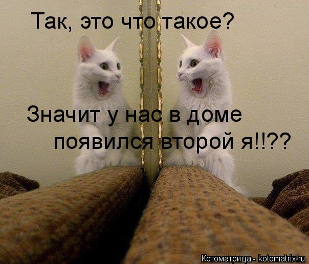 Котоматрица: Так, это что такое? Значит у нас в доме  появился второй я!!??