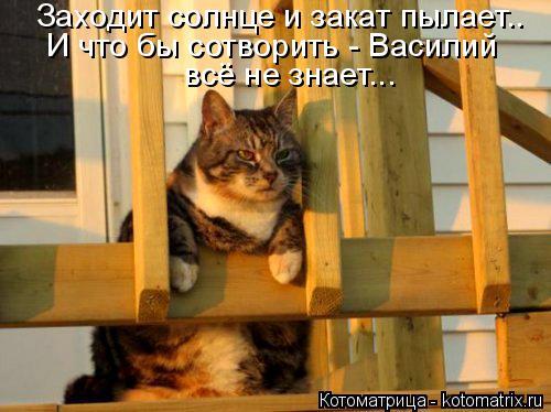 Котоматрица: Заходит солнце и закат пылает.. И что бы сотворить - Василий  всё не знает...