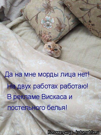 Котоматрица: Да на мне морды лица нет! На двух работах работаю! В рекламе Вискаса и  постельного белья!