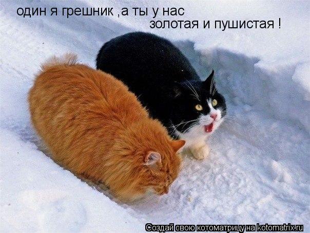 Котоматрица: один я грешник ,а ты у нас  золотая и пушистая !