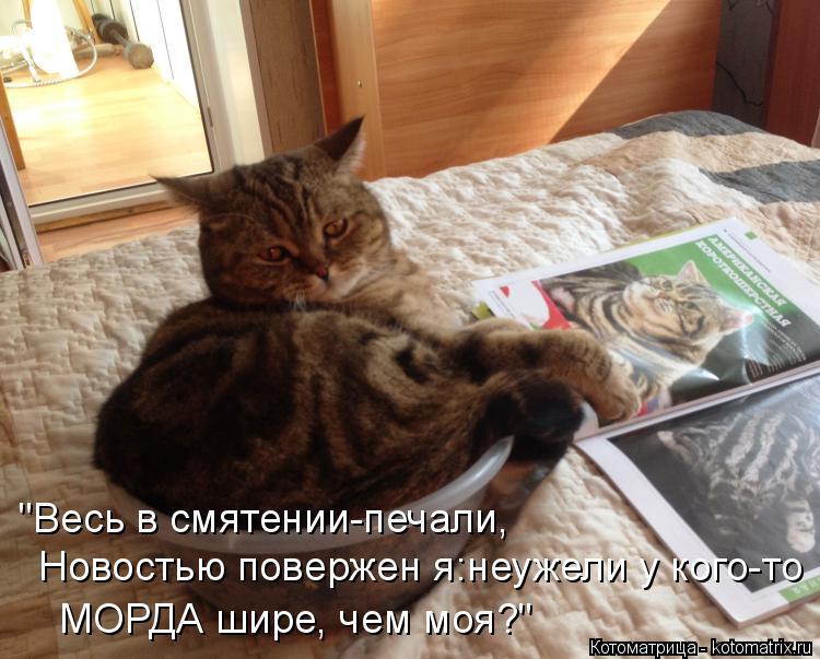 """Котоматрица: """"Весь в смятении-печали, Новостью повержен я:неужели у кого-то МОРДА шире, чем моя?"""""""