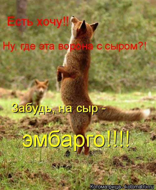 Котоматрица: Есть хочу!! Ну, где эта ворона с сыром?! Забудь, на сыр -  эмбарго!!!!