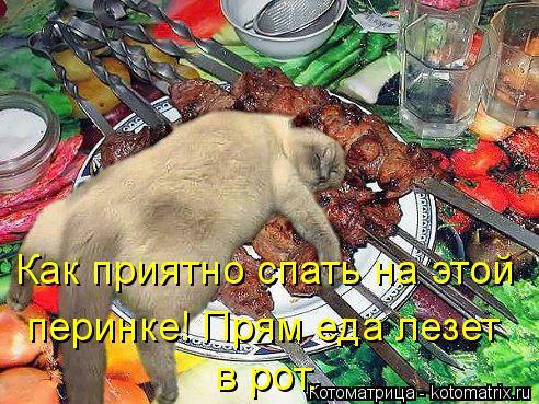 Котоматрица: Как приятно спать на этой перинке! Прям еда лезет в рот.