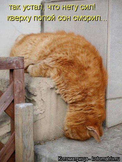 Котоматрица: так устал, что нету сил! кверху попой сон сморил...