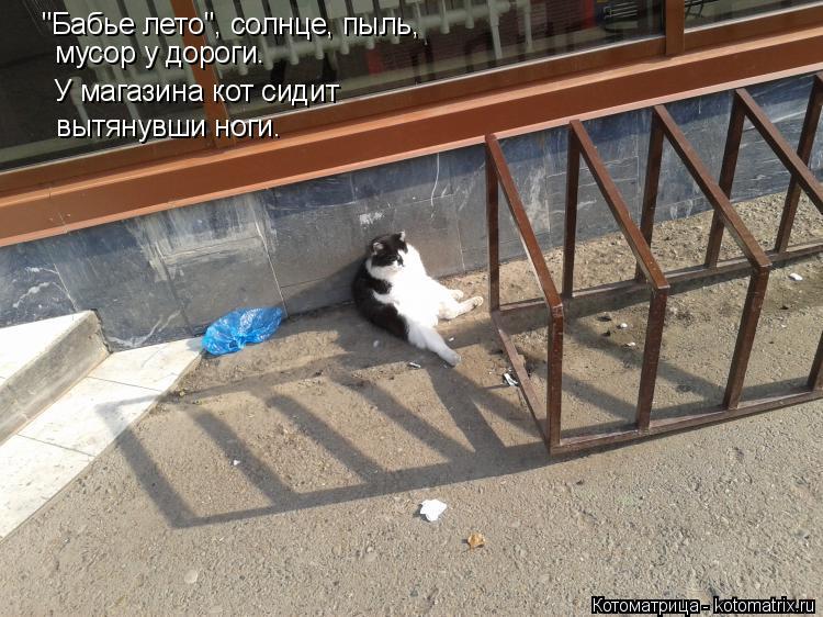 """Котоматрица: """"Бабье лето"""", солнце, пыль,  мусор у дороги. У магазина кот сидит вытянувши ноги."""