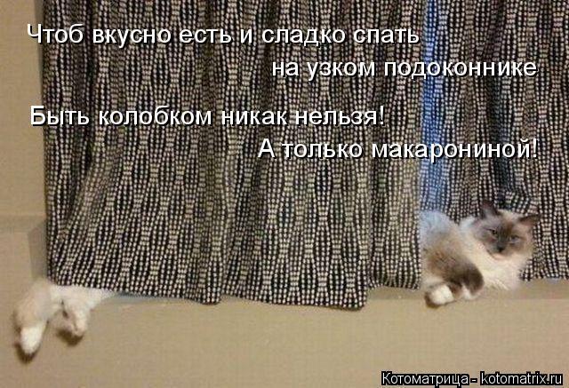 Котоматрица: Чтоб вкусно есть и сладко спать на узком подоконнике Быть колобком никак нельзя! А только макарониной!