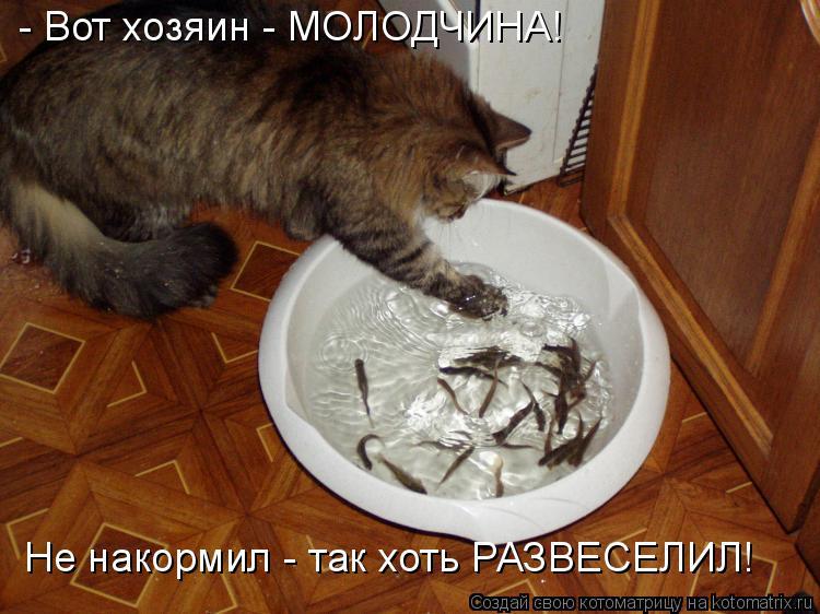 Котоматрица: - Вот хозяин - МОЛОДЧИНА! Не накормил - так хоть РАЗВЕСЕЛИЛ!