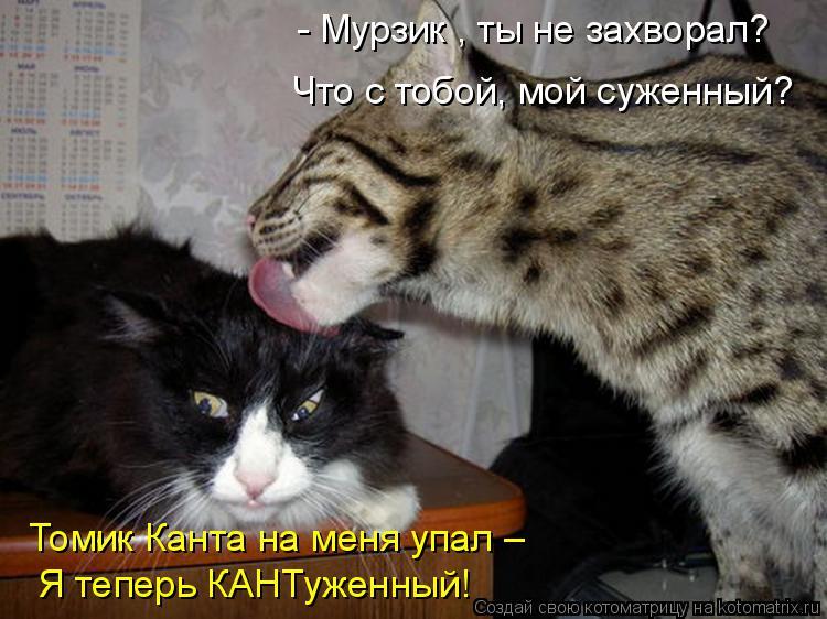 Котоматрица: - Мурзик , ты не захворал? Что с тобой, мой суженный? Томик Канта на меня упал – Я теперь КАНТуженный!
