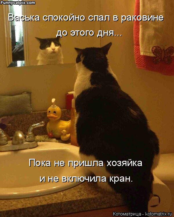 Котоматрица: Васька спокойно спал в раковине до этого дня... Пока не пришла хозяйка  и не включила кран.