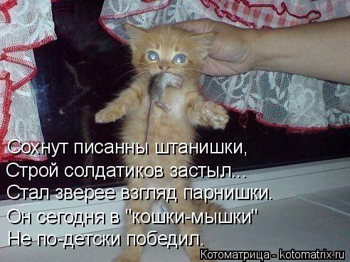 """Котоматрица: Не по-детски победил. Он сегодня в """"кошки-мышки"""" Строй солдатиков застыл... Сохнут писанны штанишки, Стал зверее взгляд парнишки."""