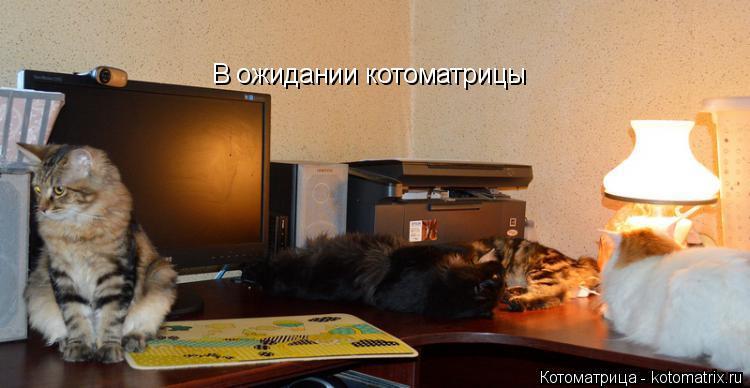 Котоматрица: В ожидании котоматрицы