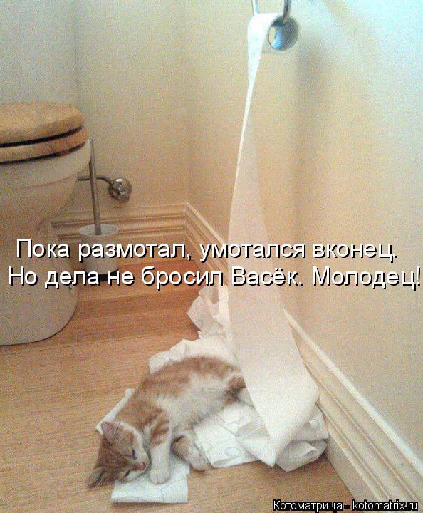Котоматрица: Пока размотал, умотался вконец. Но дела не бросил Васёк. Молодец!