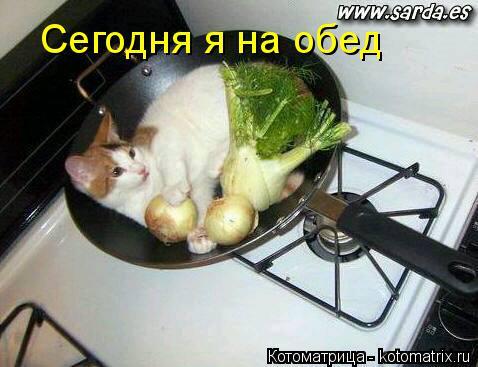 Котоматрица: Сегодня я на обед