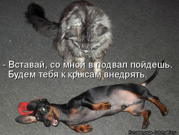 Котоматрица: - Вставай, со мной в подвал пойдешь. Будем тебя к крысам внедрять.