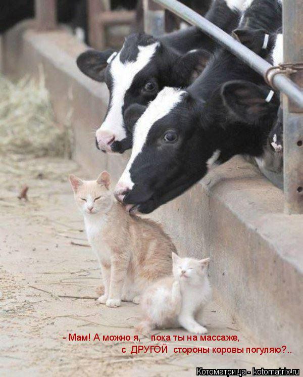 Котоматрица: с  ДРУГОЙ  стороны коровы погуляю?.. - Мам! А можно я,    пока ты на массаже,
