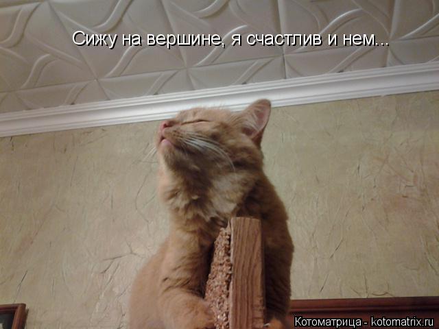 Котоматрица: Сижу на вершине, я счастлив и нем...