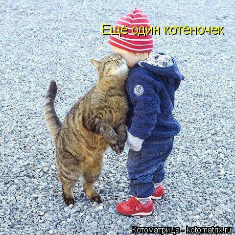 Котоматрица: Ещё один котёночек