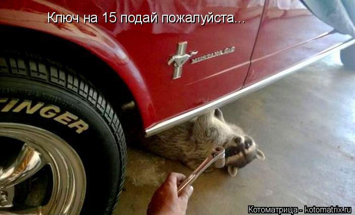 Котоматрица: Ключ на 15 подай пожалуйста...