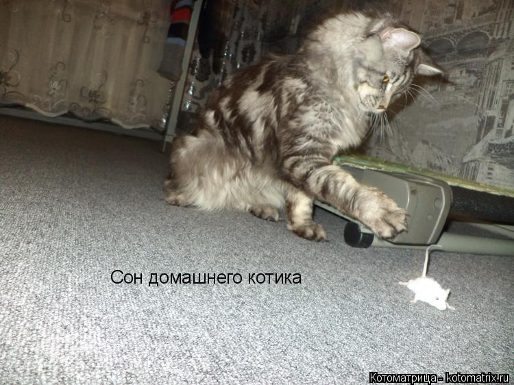 Котоматрица: Сон домашнего котика