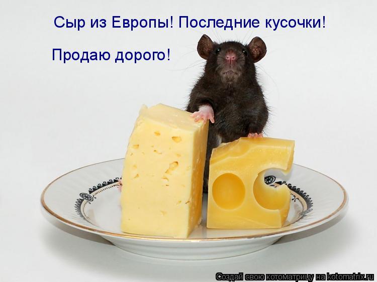 Котоматрица: Сыр из Европы! Последние кусочки! Продаю дорого!