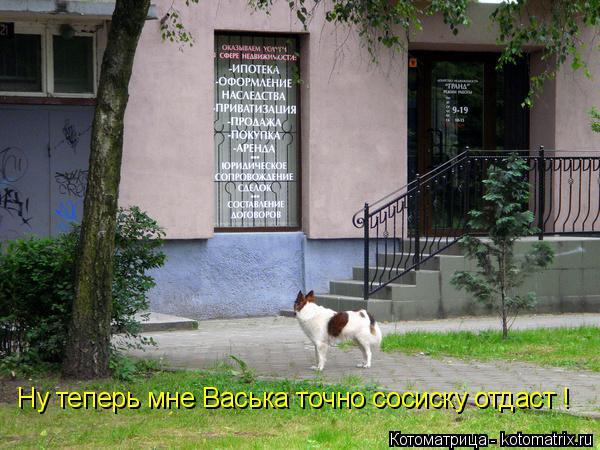 Котоматрица: Ну теперь мне Васька точно сосиску отдаст !