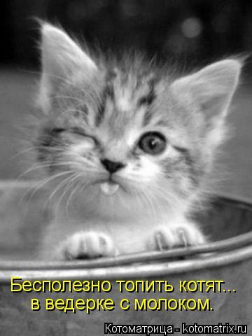 Котоматрица: Бесполезно топить котят...  в ведерке с молоком.