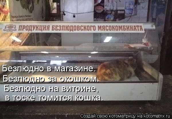 Котоматрица: Безлюдно в магазине. Безлюдно за окошком. Безлюдно на витрине, в тоске томится кошка.