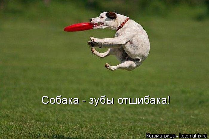 Котоматрица: Собака - зубы отшибака!