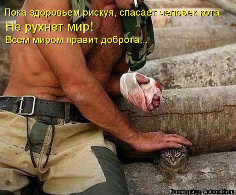 Котоматрица: Пока здоровьем рискуя, спасает человек кота, Не рухнет мир! Всем миром правит доброта...