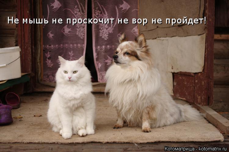 Котоматрица: Не мышь не проскочит не вор не пройдет!