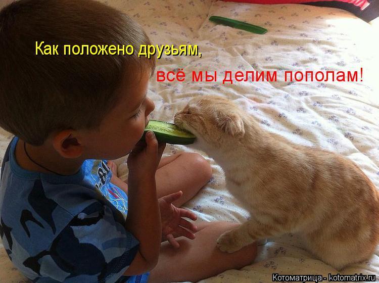 Котоматрица: Как положено друзьям, всё мы делим пополам!