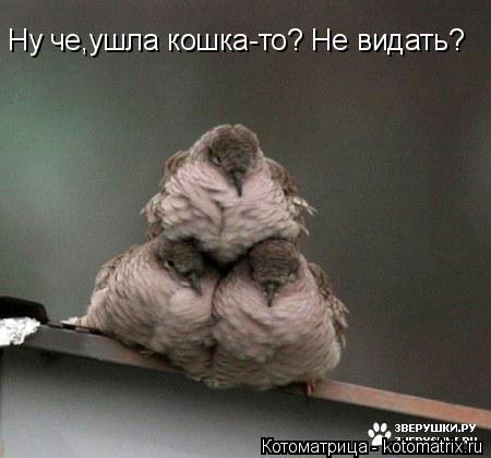 Котоматрица: Ну че,ушла кошка-то? Не видать?