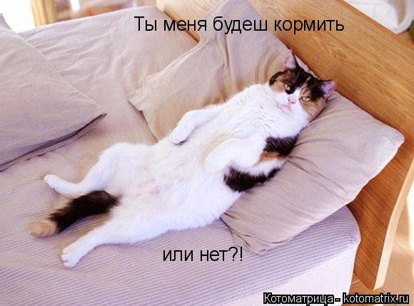 Котоматрица: Ты меня будеш кормить или нет?!