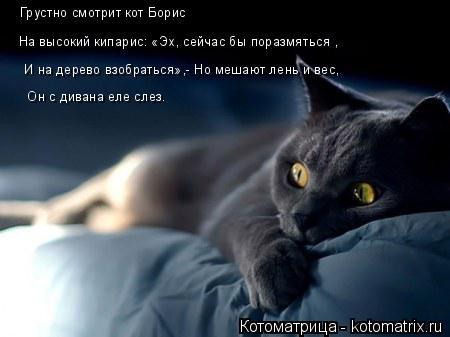 Котоматрица: Грустно смотрит кот Борис На высокий кипарис: «Эх, сейчас бы поразмяться ,  И на дерево взобраться»,- Но мешают лень и вес,  Он с дивана еле сле