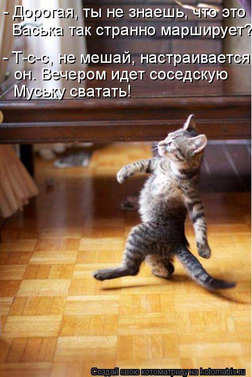 Котоматрица: - Дорогая, ты не знаешь, что это Васька так странно марширует? - Т-с-с, не мешай, настраивается он. Вечером идет соседскую Муську сватать!