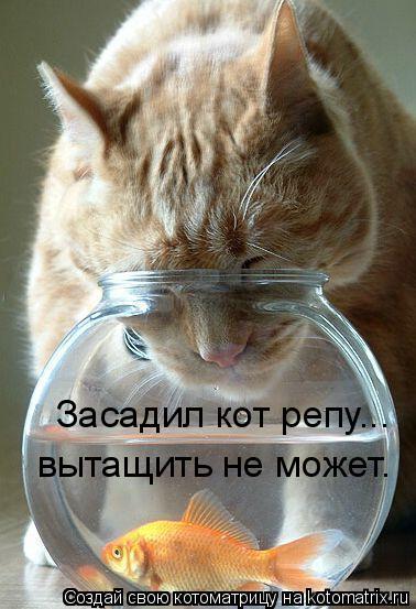 Котоматрица: Засадил кот репу... вытащить не может.