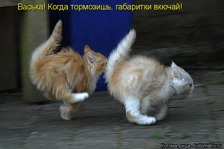 Котоматрица: Васька! Когда тормозишь, габаритки вкючай!
