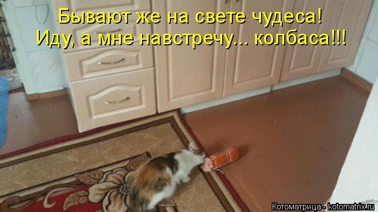 Котоматрица: Бывают же на свете чудеса! Иду, а мне навстречу... колбаса!!!