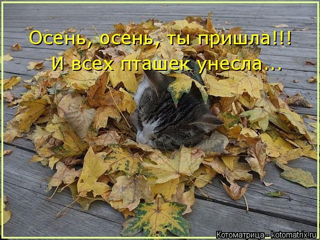 Котоматрица: Осень, осень, ты пришла!!! И всех пташек унесла...