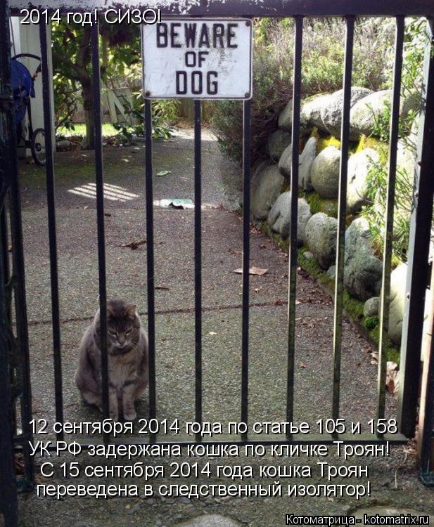 Котоматрица: 2014 год! СИЗО! 12 сентября 2014 года по статье 105 и 158 УК РФ задержана кошка по кличке Троян! С 15 сентября 2014 года кошка Троян переведена в следстве