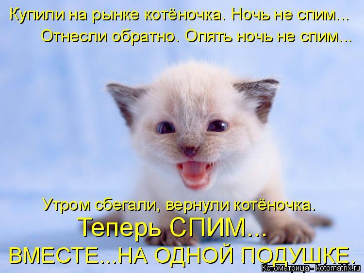 Котоматрица: Купили на рынке котёночка. Ночь не спим... Отнесли обратно. Опять ночь не спим... Утром сбегали, вернули котёночка. Теперь СПИМ... ВМЕСТЕ...НА ОД