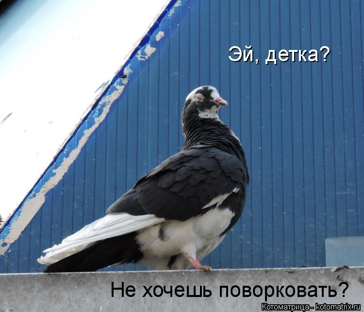 Котоматрица: Эй, детка? Не хочешь поворковать?