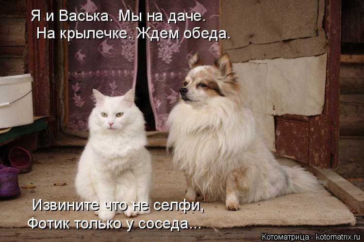 Котоматрица: Я и Васька. Мы на даче. На крылечке. Ждем обеда. Извините что не селфи, Фотик только у соседа...