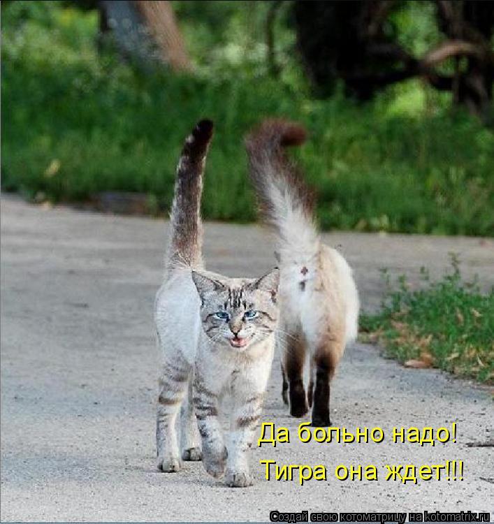 Котоматрица: Да больно надо! Тигра она ждет!!!