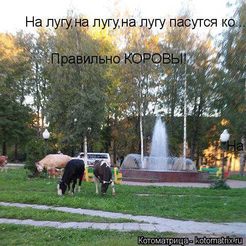 Котоматрица: На лугу,на лугу,на лугу пасутся ко........Правильно КОРОВЫ! На лугу,на лугу,на лугу пасутся ко........Правильно КОРОВЫ! .Правильно КОРОВЫ!