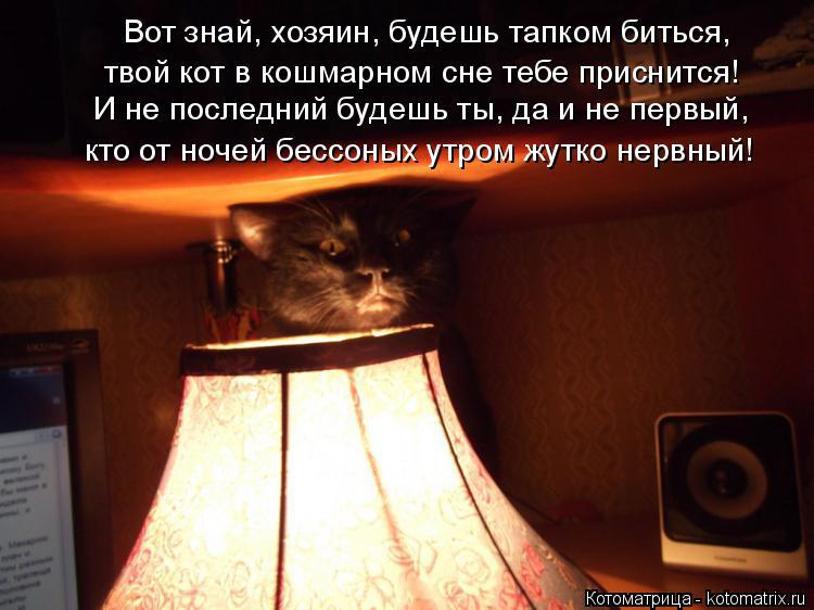 Котоматрица: Вот знай, хозяин, будешь тапком биться, твой кот в кошмарном сне тебе приснится! И не последний будешь ты, да и не первый, кто от ночей бессоны