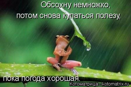 Котоматрица: потом снова купаться полезу, пока погода хорошая. Обсохну немножко,
