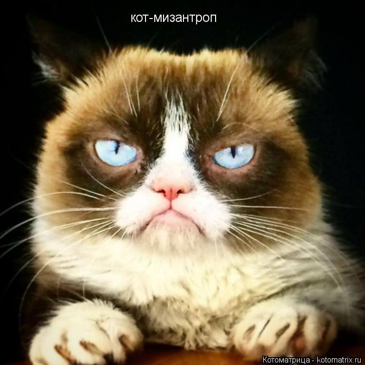 Котоматрица: кот-мизантроп