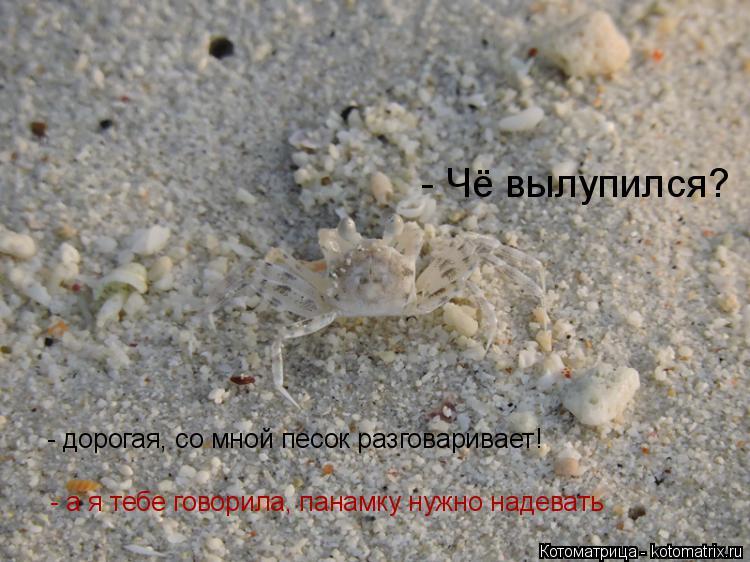Котоматрица: - Чё вылупился? - дорогая, со мной песок разговаривает! - а я тебе говорила, панамку нужно надевать